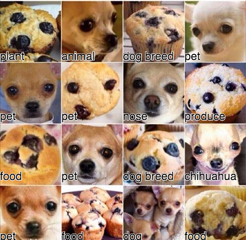 Trying to confuse Google's Vision algorithms with dogs and muffins